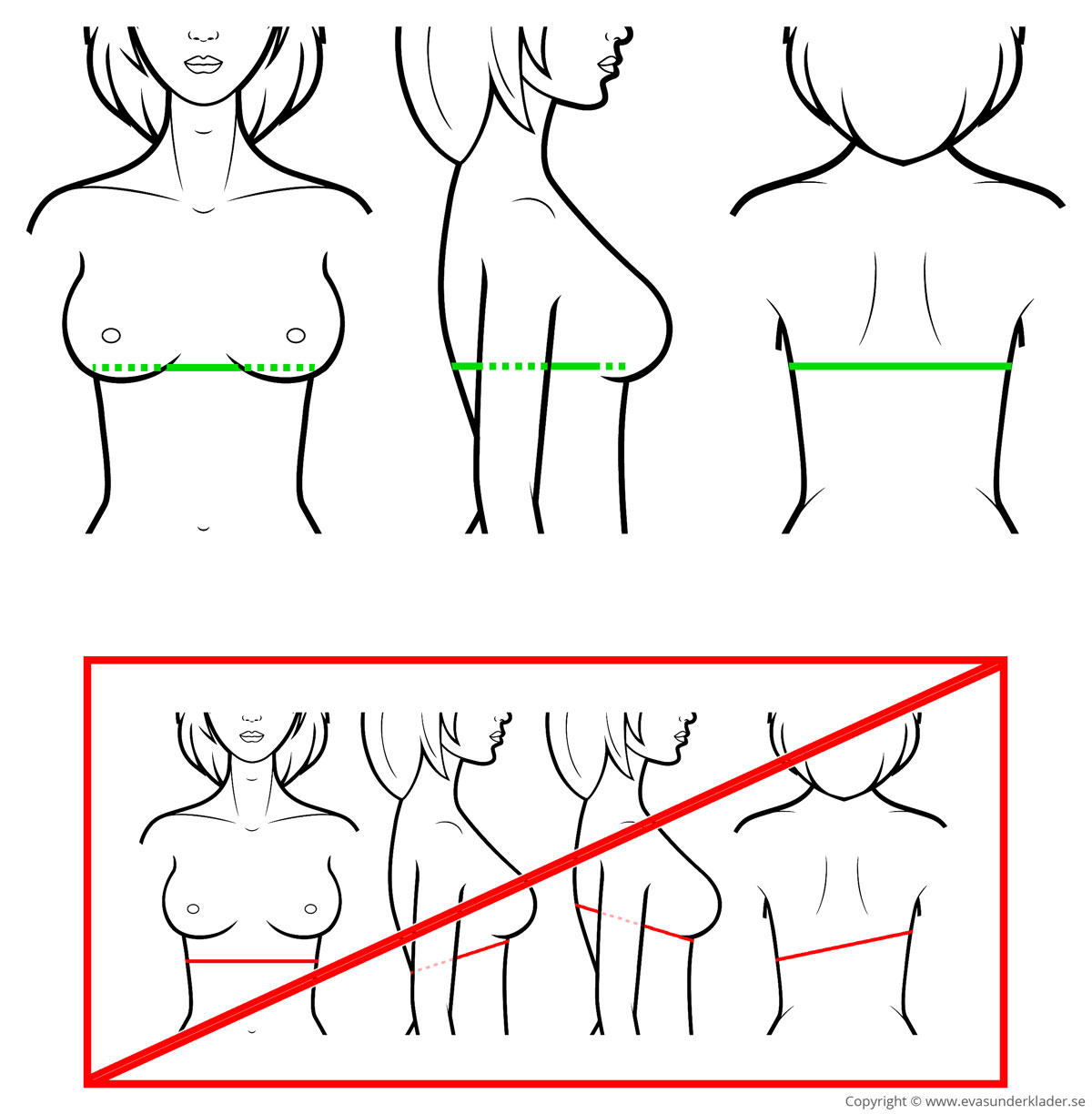 Tape measure placement when  measuring bra band dimensions.